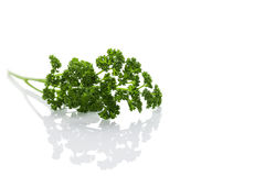 Parsley on white Stock Image