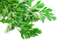 Parsley on white background Royalty Free Stock Image