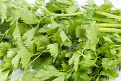 Parsley. On a white background Stock Photos