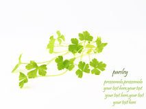 Parsley on white background. Green parsley on white background Royalty Free Stock Photography
