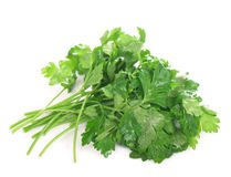 Parsley on a white background Stock Photos