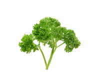 Parsley on white background Royalty Free Stock Photos