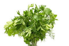 Parsley on a white background Royalty Free Stock Photos
