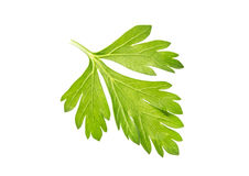 Parsley on white background Stock Photography
