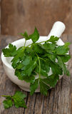 Parsley in white mortar Stock Images