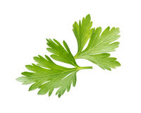 Parsley  on white Stock Images