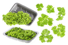 Parsley on white Stock Photography