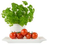 Parsley in the white pot and tomato Royalty Free Stock Image
