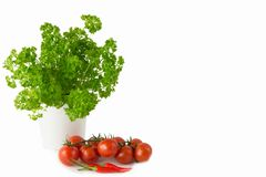 Parsley in the white pot and tomato Stock Images