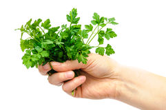 Parsley woman hand isolated Stock Image