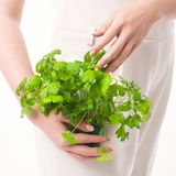 Parsley woman hand white background stock photography