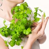 Parsley woman hand white background royalty free stock images