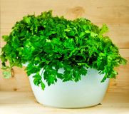 Parsley on a wooden table Stock Photography