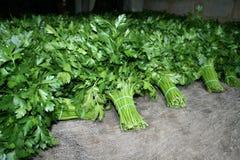 parsleystaplar Royaltyfri Foto