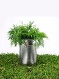 parsleytin Royaltyfri Bild
