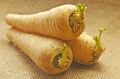 Parsnip Royalty Free Stock Photo