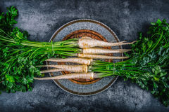 Parsnip. Fresh parsnip. Parsnip with parsley on concrete board. Several fresh parsnip pieces with parsley top. Parsley herbs. Stock Photos