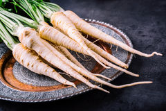 Parsnip. Fresh parsnip. Parsnip with parsley on concrete board. Several fresh parsnip pieces with parsley top. Parsley herbs. Stock Image