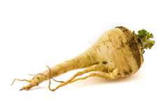 Parsnip isolated on white Stock Photography