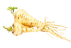 Parsnip isolated on white background. Royalty Free Stock Images