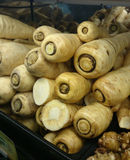 Parsnip, Pastinaca sativa Royalty Free Stock Images