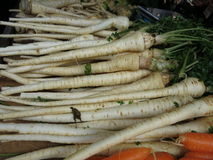 Parsnip Royalty Free Stock Image