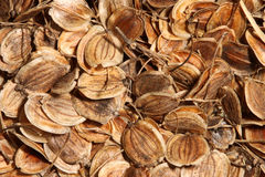 Parsnip seed background Stock Photo