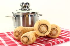 Parsnips. Four parsnips on a red dish towel Stock Image