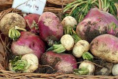 Parsnips and turnips Stock Photos