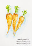 Parsnips'watercolor painted Royalty Free Stock Image