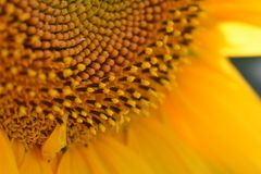 Partículas del polvo del polen Fotografía de archivo