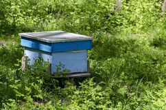 Part of apiary  with  view toward  hive Royalty Free Stock Photography
