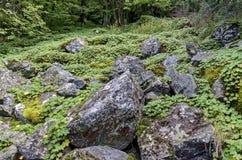Part of authentic rockery in Vitosha mountain Royalty Free Stock Photo