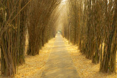 The part in bamboo forest. Path in bamboo forest in autumn Stock Photos
