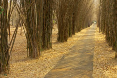The part in bamboo forest. Stock Photos
