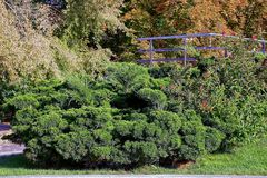 Part of a beautiful garden with ornamental plants and iron handrails. Beautiful decorative vegetation in the city park royalty free stock photography