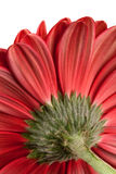 Part of a beautiful red flower Royalty Free Stock Image