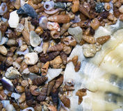 Part of the big shells on the background of smaller small shells Royalty Free Stock Photos