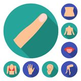 Part of the body, limb flat icons in set collection for design. Human anatomy vector symbol stock web illustration. Part of the body, limb flat icons in set Royalty Free Stock Photos