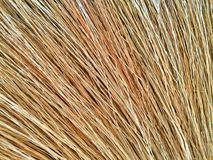 Part of broom grass Stock Image