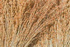 A PART OF BROOMS Royalty Free Stock Images