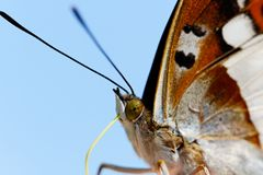 Part of butterfly. Royalty Free Stock Images