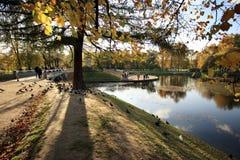 Part of city park. Autumn landscape in city park Stock Photography