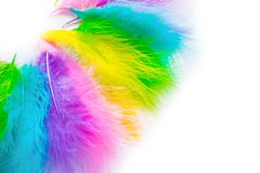 Multicolored bright feathers for the Brazilian carnival. White b. Part of the costume for the Brazilian carnival. Colored bright feathers Stock Photography