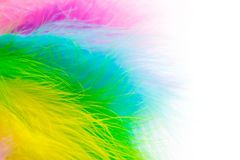 Multicolored bright feathers for the Brazilian carnival. White b. Part of the costume for the Brazilian carnival. Colored bright feathers Stock Photo