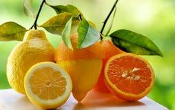 Part d'orange et de citron. Image stock