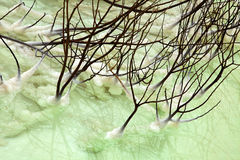 Withered Bush in Dead Sea Stock Image