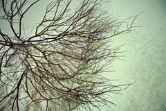 Dead Bush in Dead Sea Stock Photos