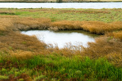 Part of the delta of river Evros, Greece Royalty Free Stock Photo