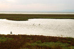 Part of the delta of river Evros, Greece Royalty Free Stock Photography